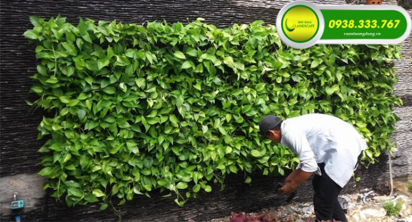 61911 Tường cây đòi hỏi phải được chăm sóc để có thể phát triển tốt và bền lâu nhất