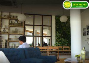 thi cong tuong cay cafe