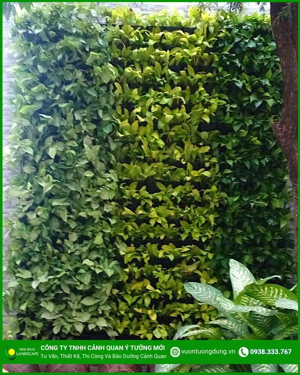 Hình ảnh tường cây xanh 3
